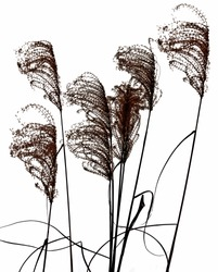 grass silhouettes on white background