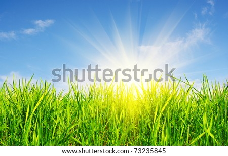 grass, sky and sun - stock photo