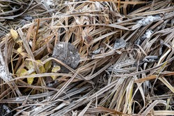 Grass strands and leaves covered with ice in brown and yellow winter colors. Frozen forest elements background.