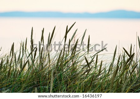 Grass straw on the beach in sunset