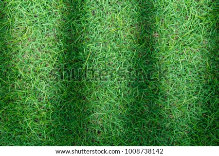 Grass texture background for golf course, soccer field or sports concept design. - Shutterstock ID 1008738142