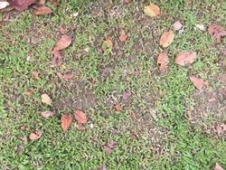 grass texture dirt ground cover