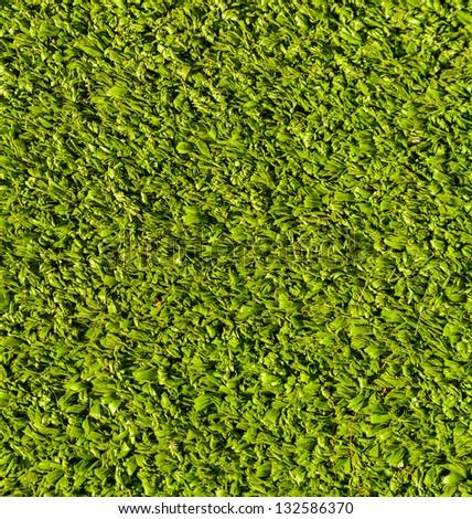 grass texture for background&wallpaper
