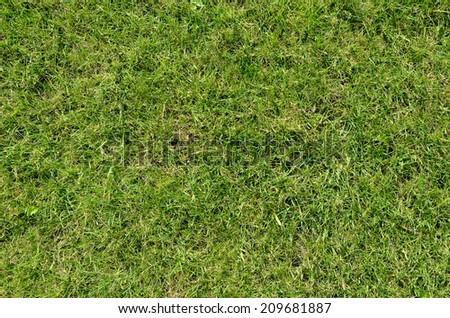 grass texture may be used as background
