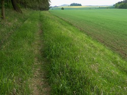 Grass trail on the edge of the forest. Spring landscape with lush green grass and young corn, and with yellow flowering oilseed rape in the distance.