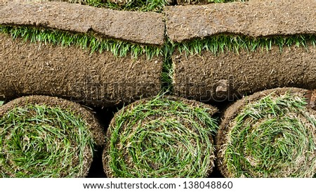 Grass turf in rolls ready to be used for gardening or landscaping.