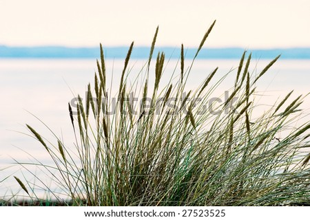 Grass turf on the beach in sunset