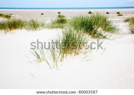 Grass turf on the sandy beach