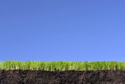 Grass turf with topsoil and root structure against a blue sky background.