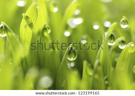grass water drops