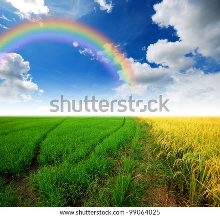Grass way yellow field and blue sky background in Thailand rainbow - stock photo