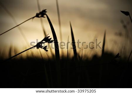 Grass Weed Dark Silhouette