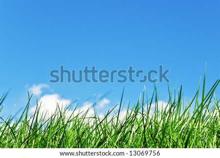 grass with cloud coming out from the blades