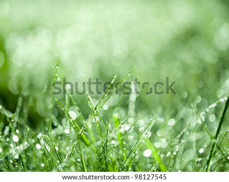 Grass with dew drops background. - stock photo