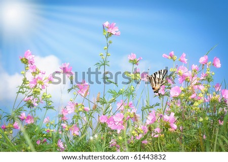 Grass with pink flowers on summer meadow with butterfly
