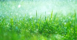 Grass with rain drops. Watering lawn. Rain. Blurred Grass Background With Water Drops closeup. Landscaping. Nature. Garden, gardening backdrop. Environment concept