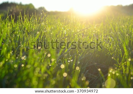 Grass with water drops in the sunlight (macro with blur)