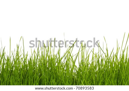 grass with white background