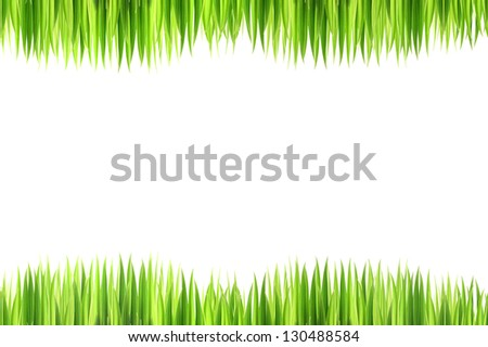 grasses on white background,isolated