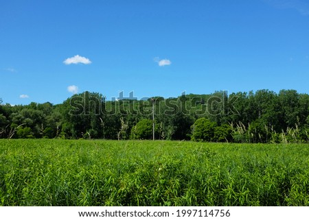 Grasses, trees and clouds at the Alan H Treman State Marine Park. Stok fotoğraf ©