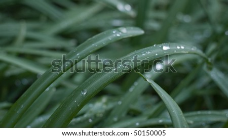 Grasses with waterdrops