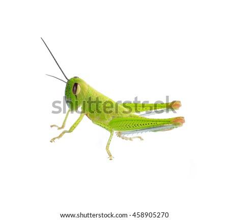grasshopper #458905270