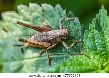 grasshopper #477929626