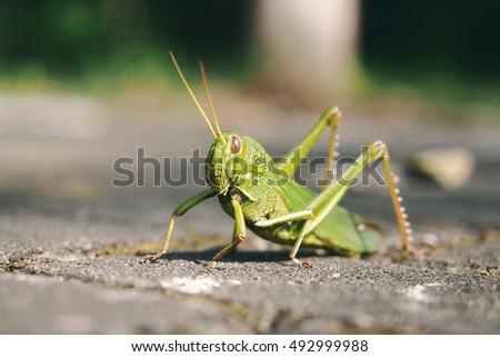 grasshopper #492999988