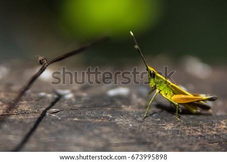 Grasshopper #673995898
