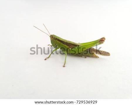 grasshopper #729536929