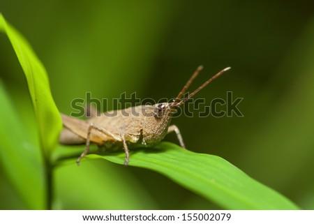 Grasshopper in the wild. #155002079