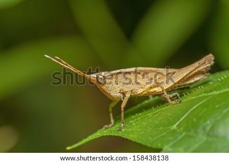 Grasshopper in the wild. #158438138