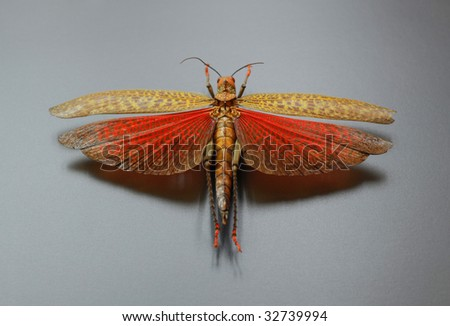 Clip Art Grasshopper. stock photo : Grasshopper