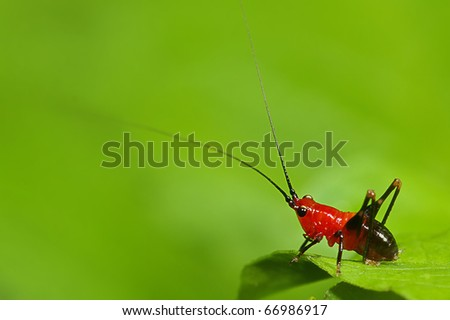 Grasshopper larva mix with green background