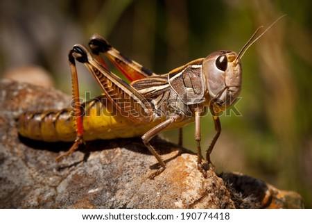 Grasshopper Macro #190774418