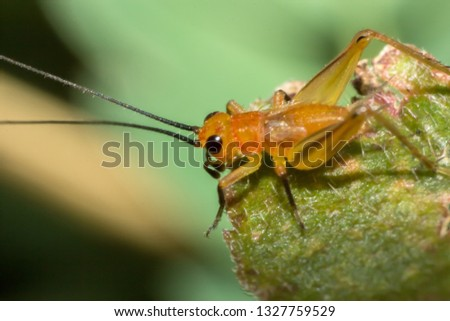 grasshopper, macro of insect in wild, animal in nature, close-up animal in wild #1327759529