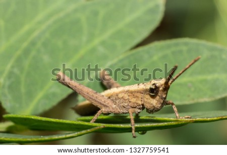 grasshopper, macro of insect in wild, animal in nature, close-up animal in wild #1327759541