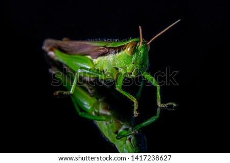 Grasshopper macro style picture. selective focus