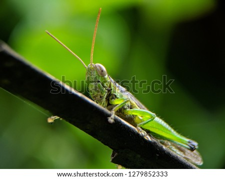 grasshopper sitting on a wooden branch
