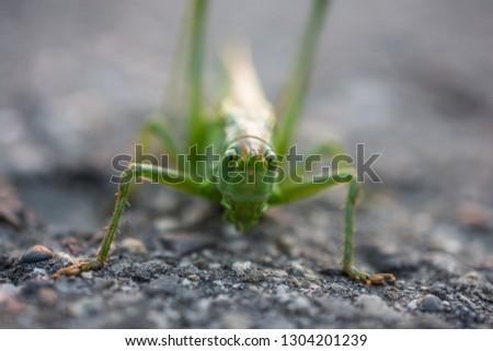 Grasshopper sitting on coal tar macro picture