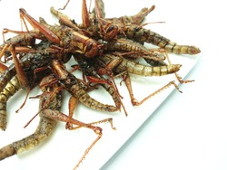 Grasshoppers insects fried on a white plate