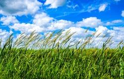 Grassland background in summer nature