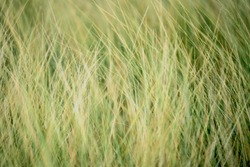grassland background / texture ; grassland in premium look