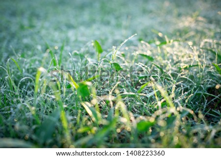 Grassland, reflective sunlight from grass, Dew on the grass #1408223360