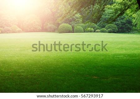 Grassland scenery - Shutterstock ID 567293917