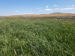 Grasslands near the waters of the San Francisco Bay, California
