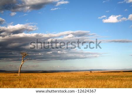 Grasslands of the Masai Mara Reserve (Kenya)