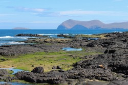 Grassy and rocky coastline on island in the Galapagos with views of volcanic mountains, ocean, and sea creatures