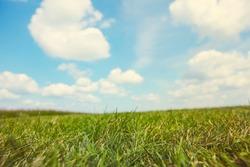 Grassy field on a sunny summer day