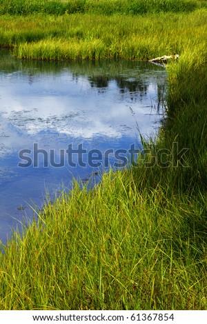 Grassy freshwater marsh at Schwabacher Landing, Grand Teton National Park